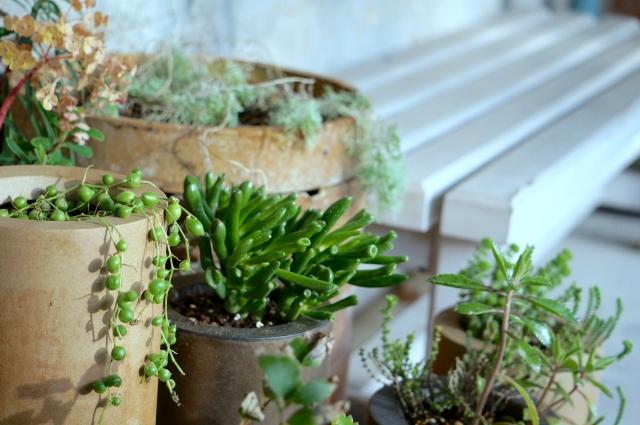 おしゃれなベランダ空間に!観葉植物選びとお手入れのコツ