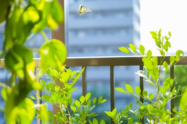 これからの季節がおすすめ!屋外用の観葉植物のお手入れ管理方法とは?